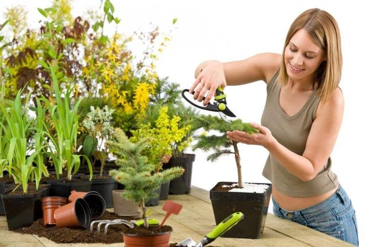cuidado-flores-interior-casa
