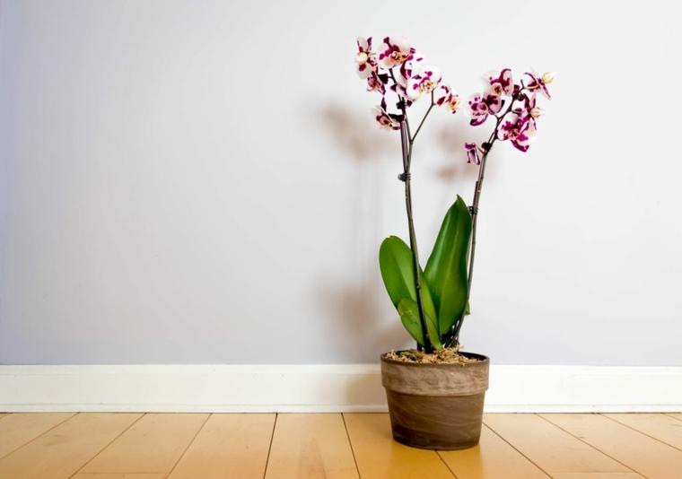 cuidar-orquideas-ideas-flores