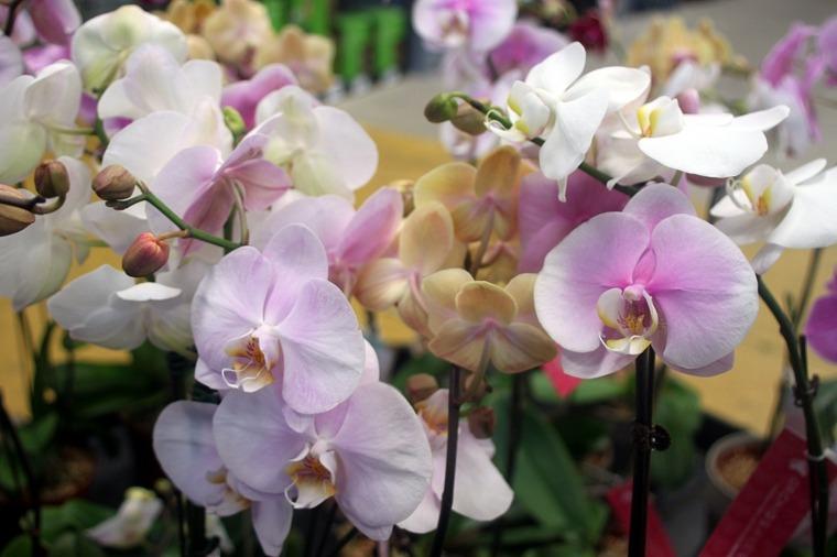 cultivar-flores-orquideas-consejos-utiles