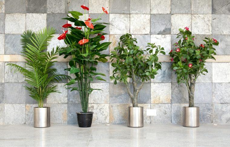 flores hermosas-interior-casa-decoracion
