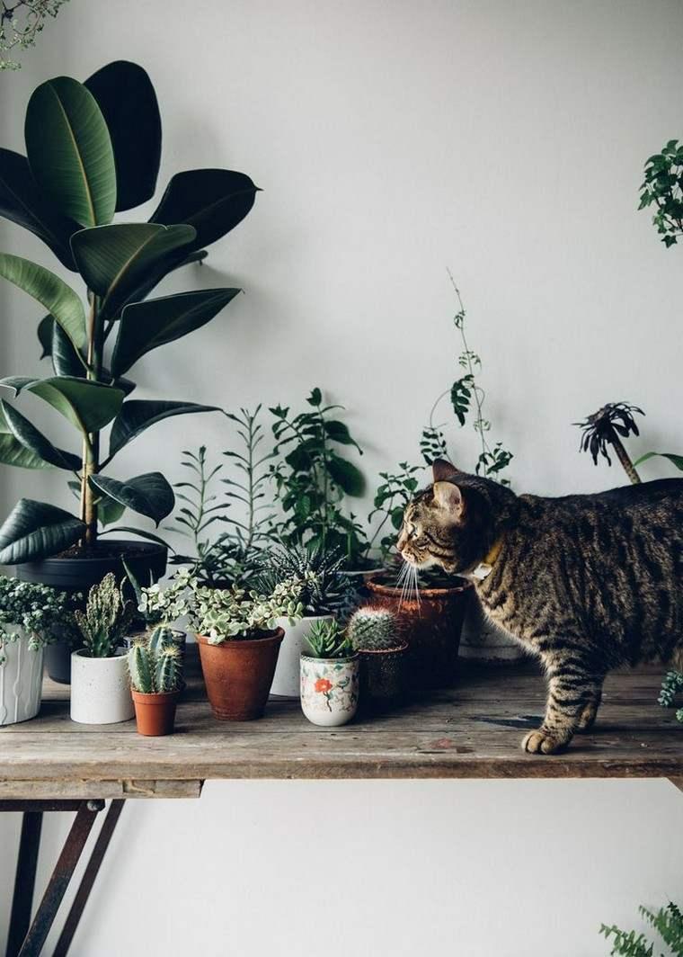 flores hermosas-interior-casa-plantas-ideas