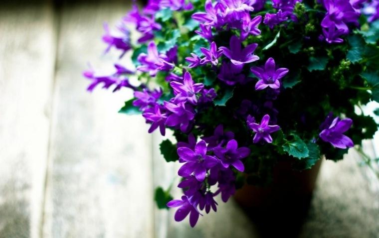 flores-interior-casa-opciones