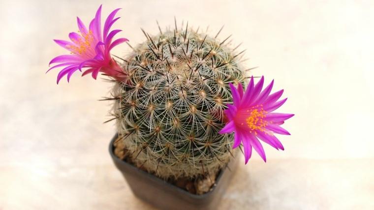 flores naturales-cuidados-vacaciones
