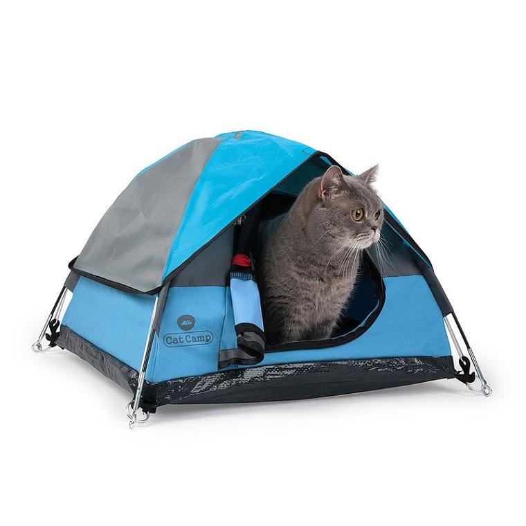 gato-tienda-camapna-opciones-originles
