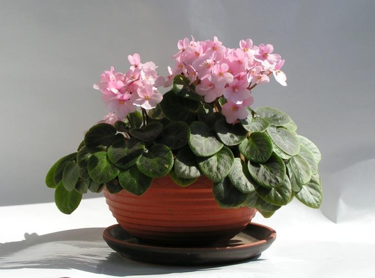 ideas-flores-casa-belleza-opciones-plantas