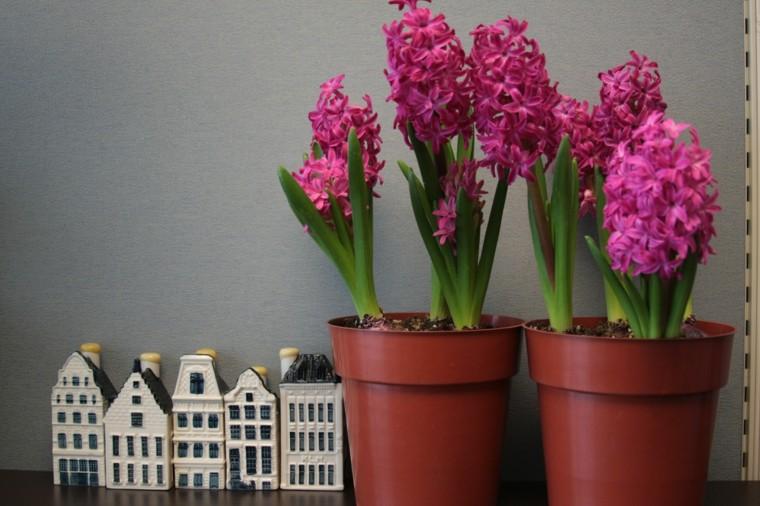 las flores-interiores-cuidados-vacaciones