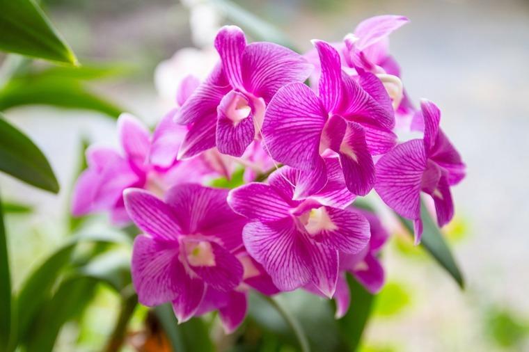 orquideas-flores-cuidado-opciones
