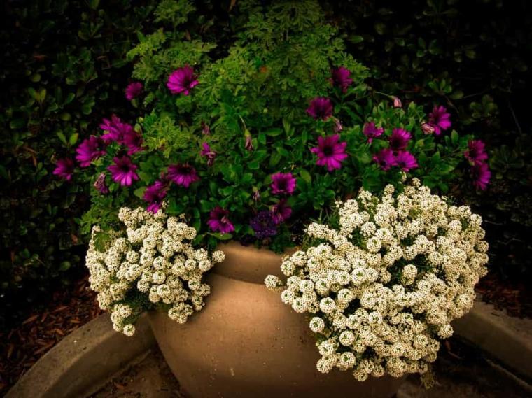 plantas con flores-agrupacion-vacaciones