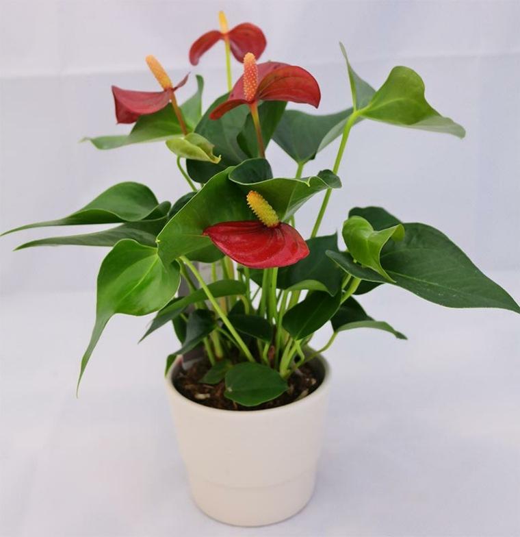 plantas con flores-cuidados-vacaciones