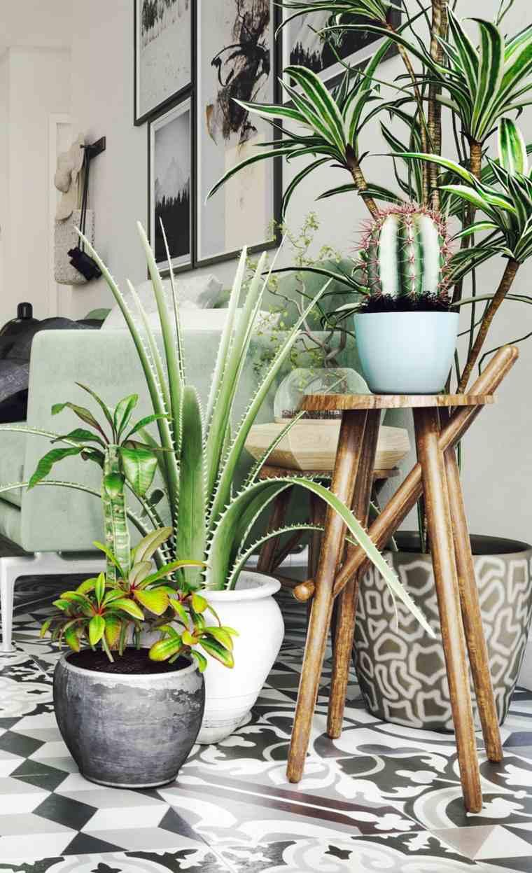 plantas-decorar-habitacion-casa-opciones-originales