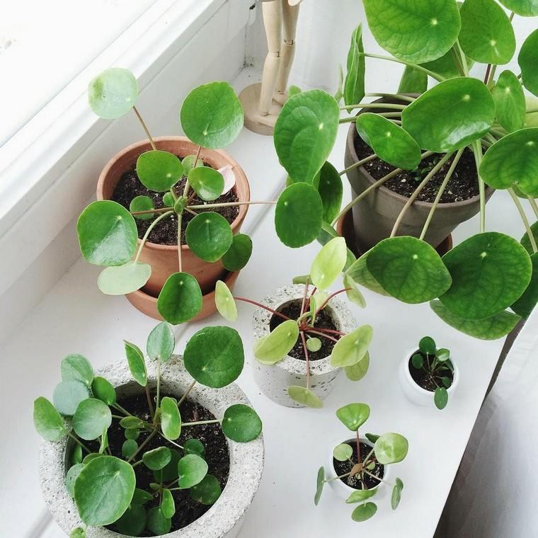 plantas-interior-bella-decoracion-habitaciones