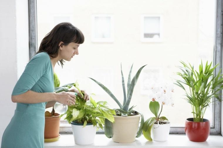 plantas-interior-casa-ideas