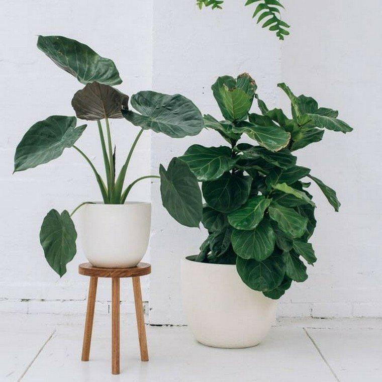plantas-macetas-blancas-ideas-opciones