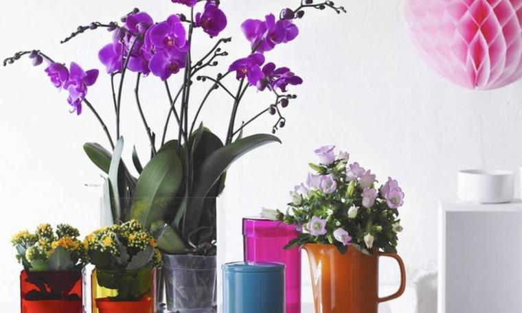 tipos de flores-agrupadas-vacaciones