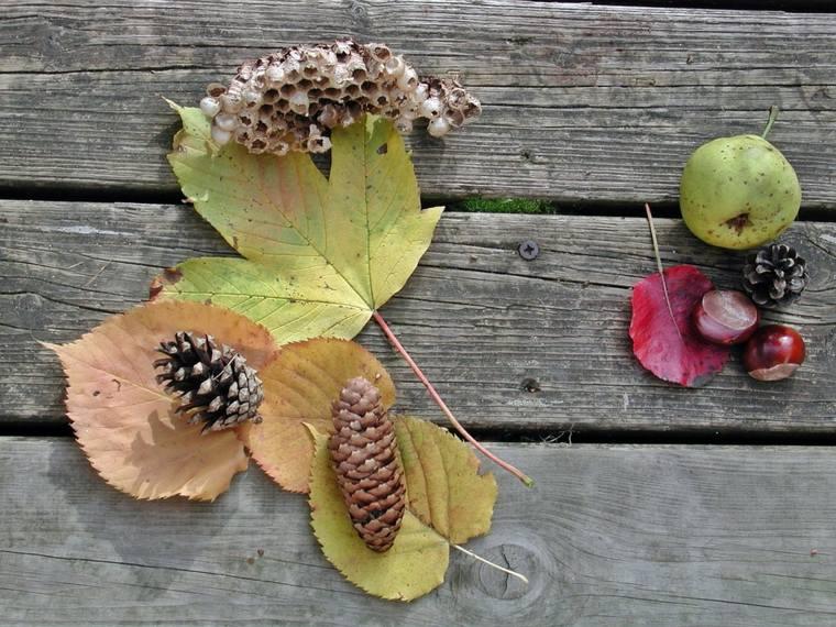 manualidades de otono hojas-pinas