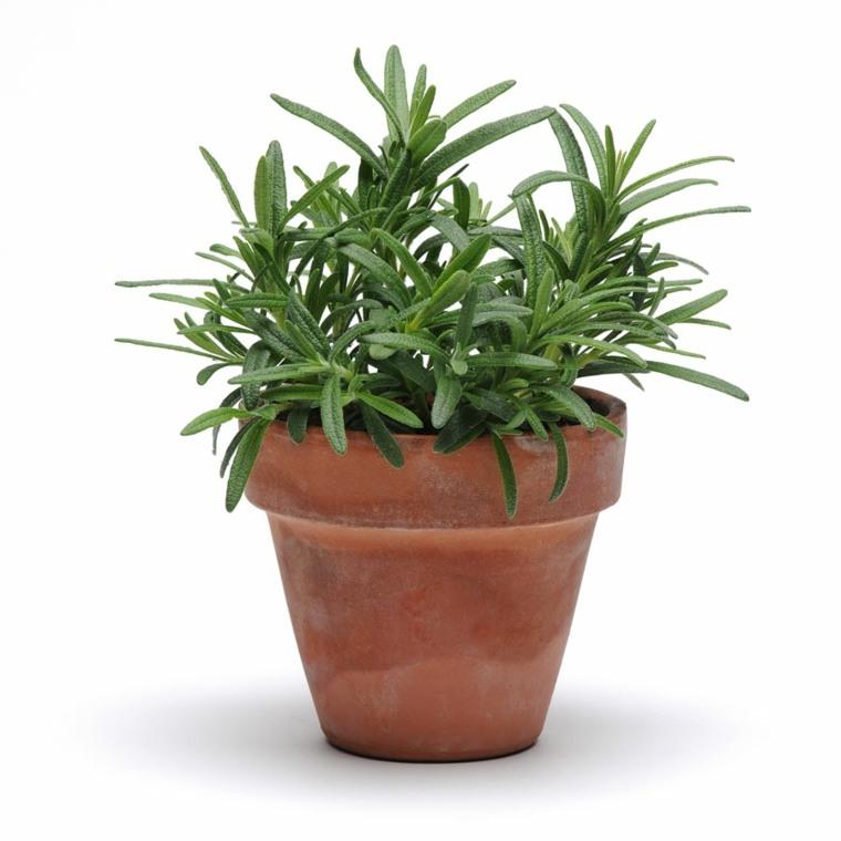 especies de plantas en-macetas