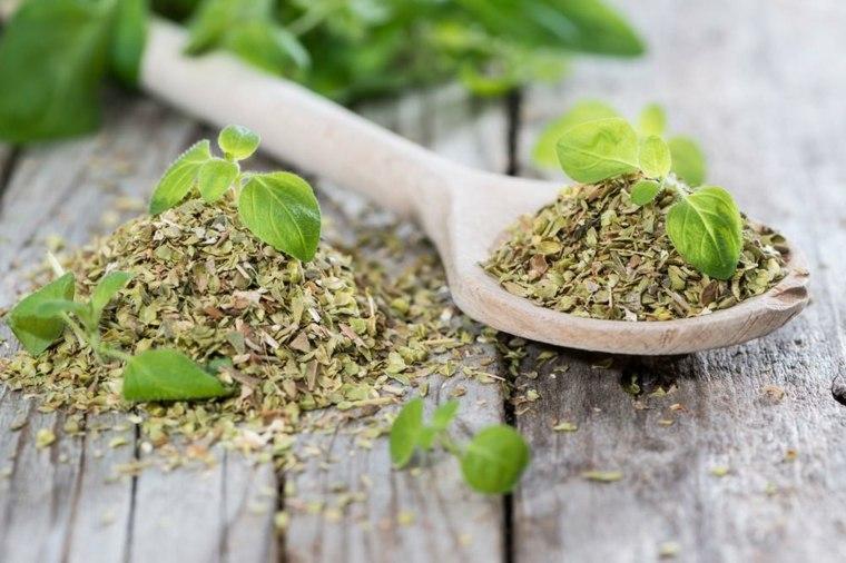 plantas-aromáticas-para-condimentos