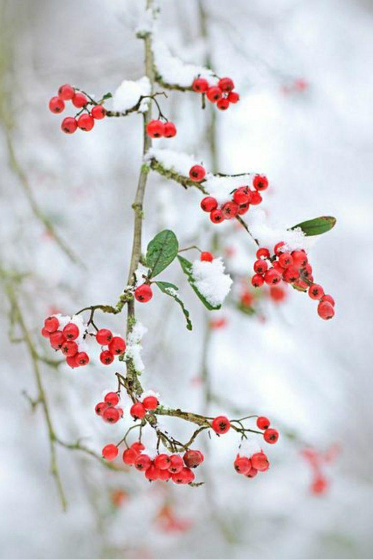 bayas-de-invierno