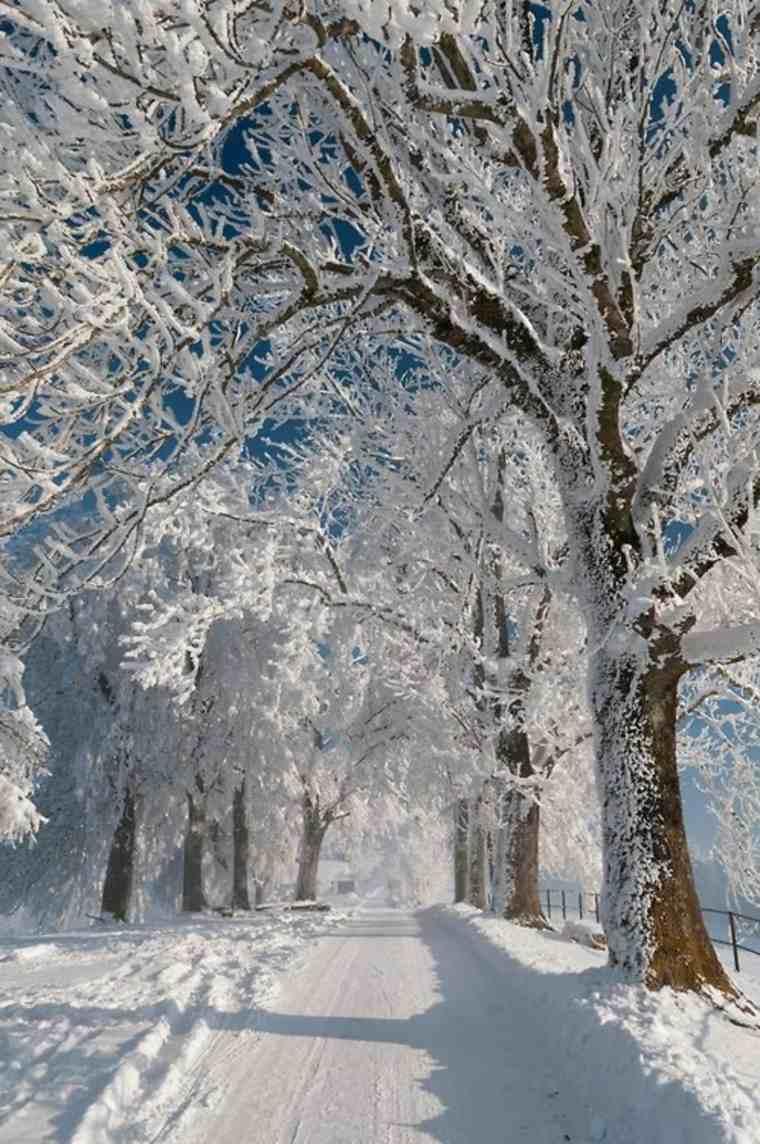 camino-de-invierno