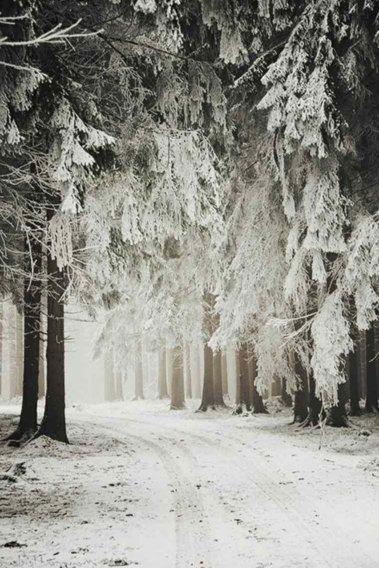 camino-por-el-bosque