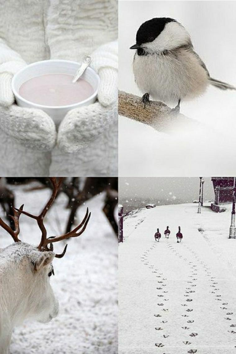 colaje-de-invierno