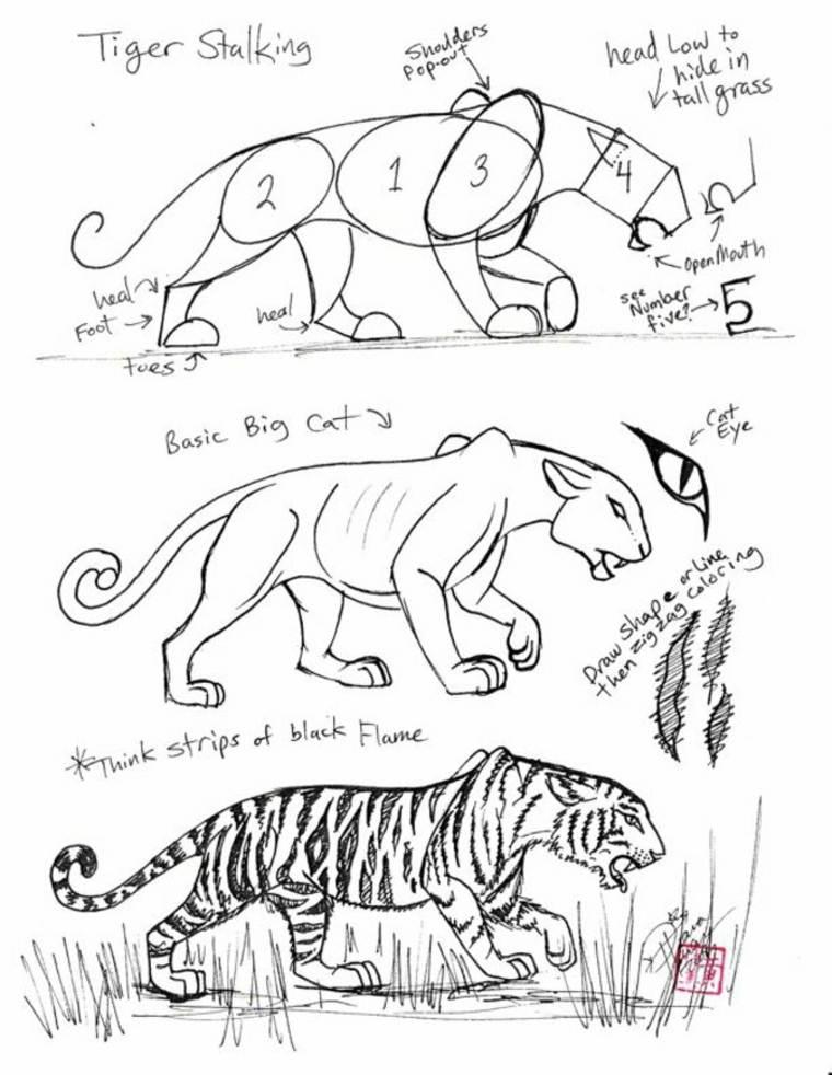 como-dibujar-tigres