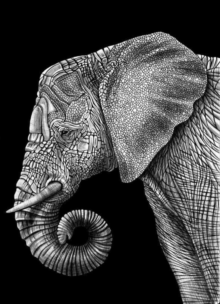 elefante-con-fondo-negro