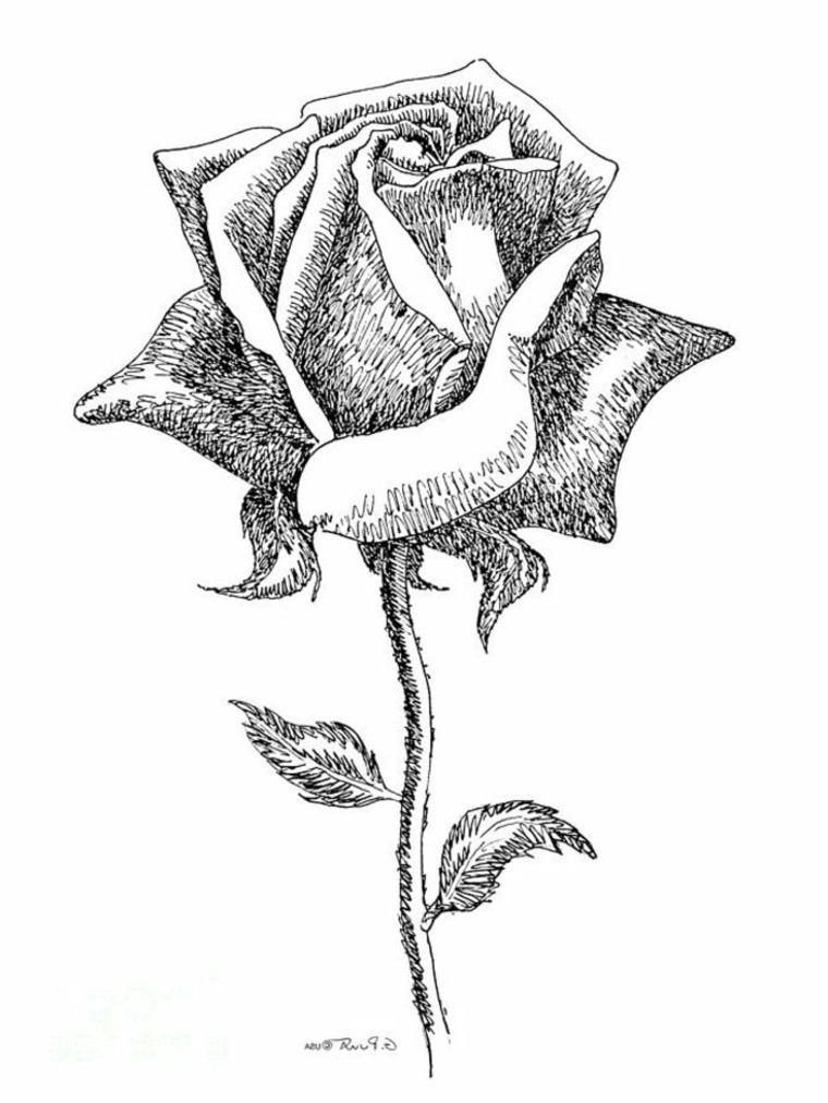 imágenes en blanco y negro rosa