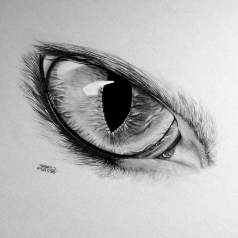 ojo-de-gato