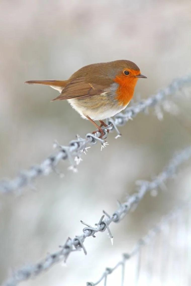 pájaro-en-invierno