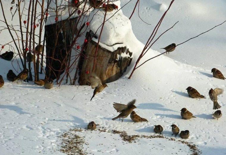 pájaros-sobre-la-nieve