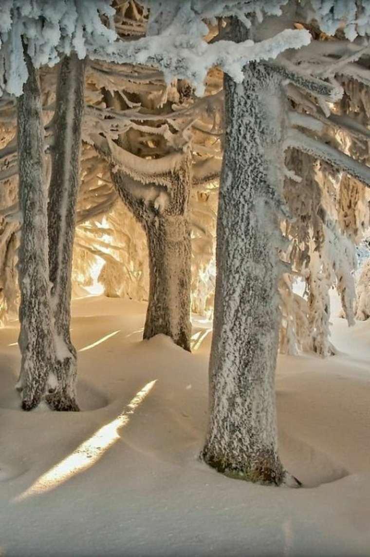 paisajes hermosos árboles