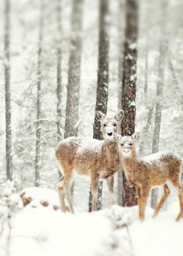 paisajes hermosos ciervos
