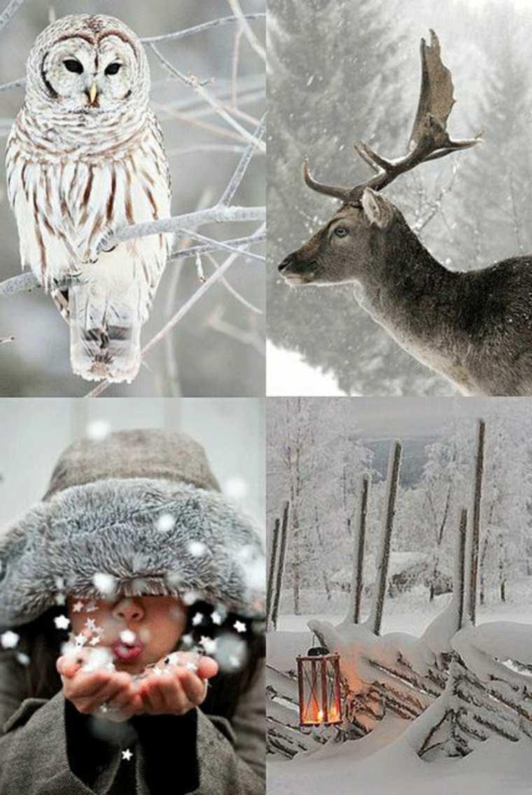 paisajes hermosos de-invierno-colaje