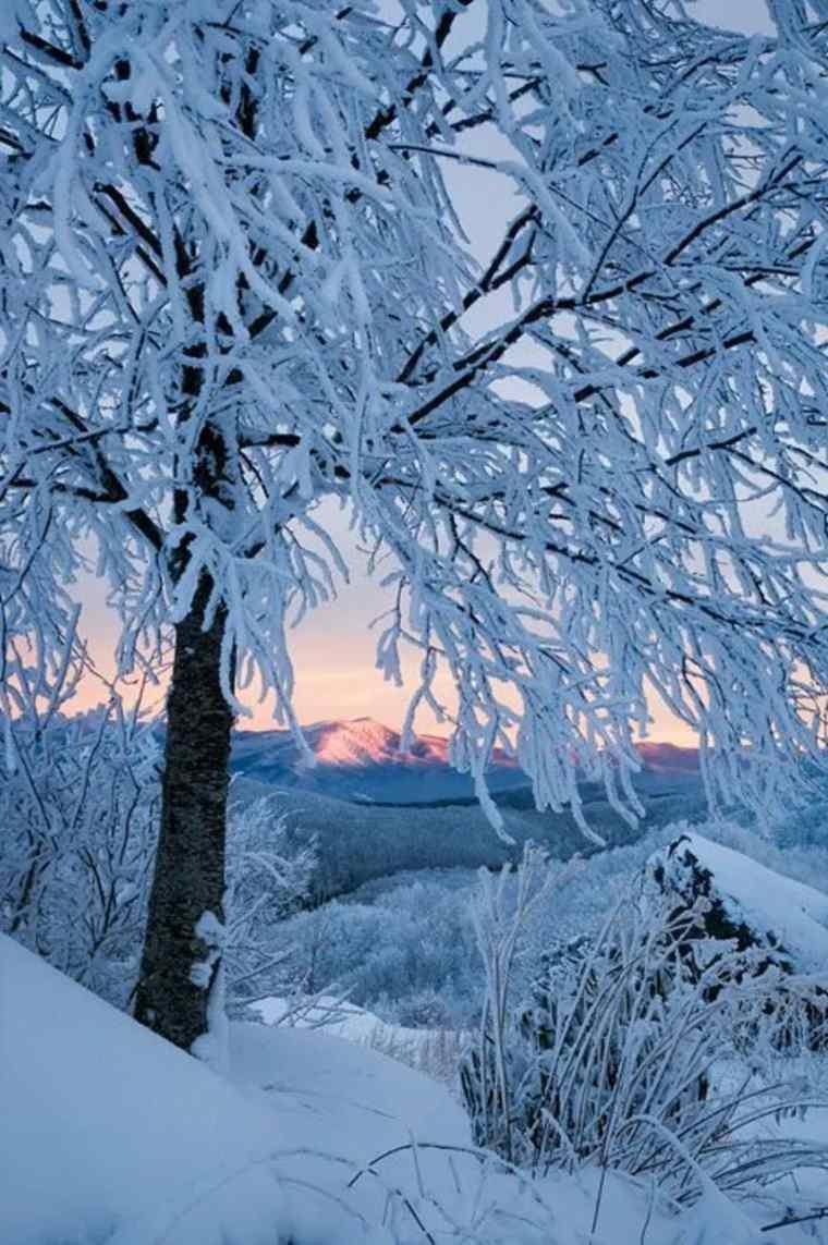 paisajes hermosos de-.invierno-árbol
