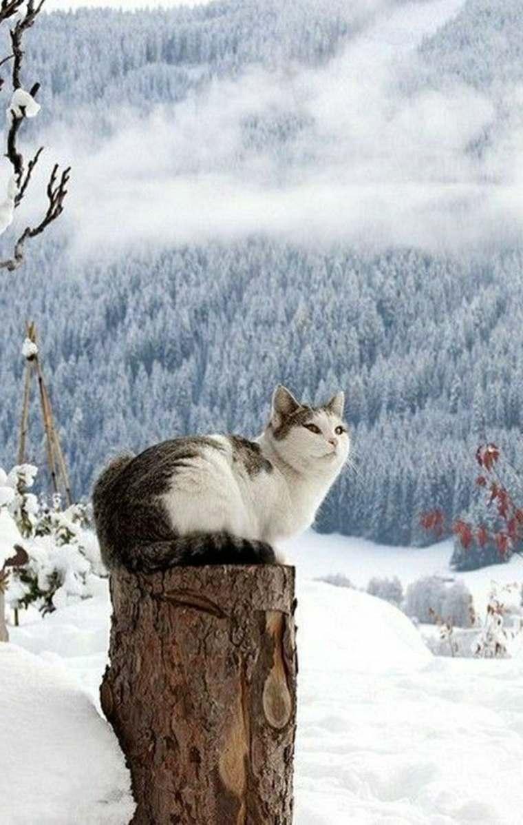 paisajes hermosos gato