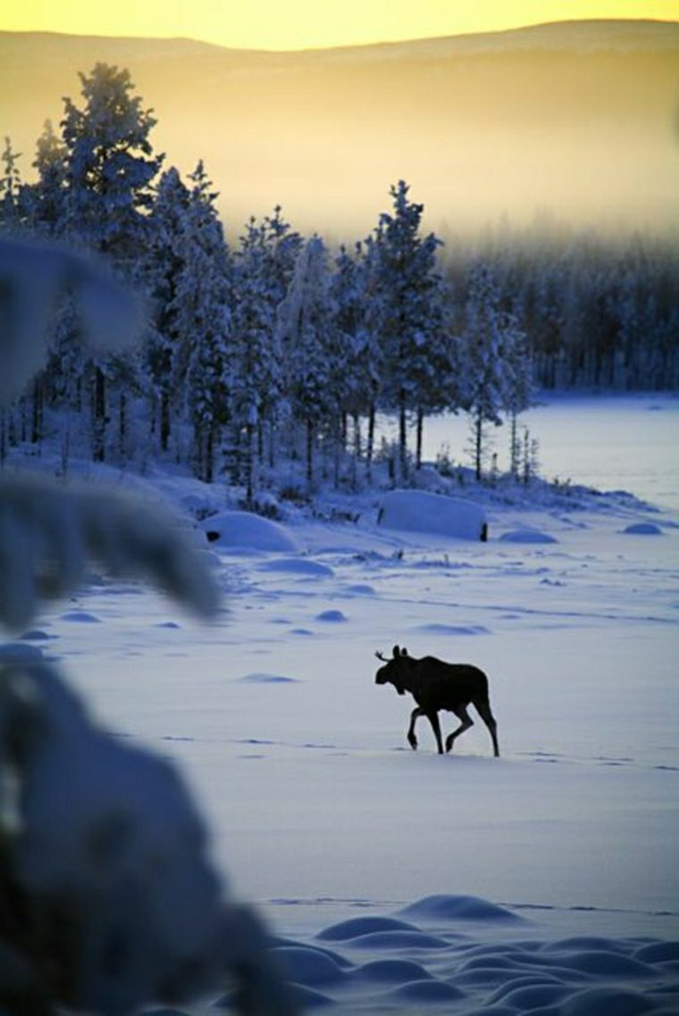 paisajes hermosos lobo