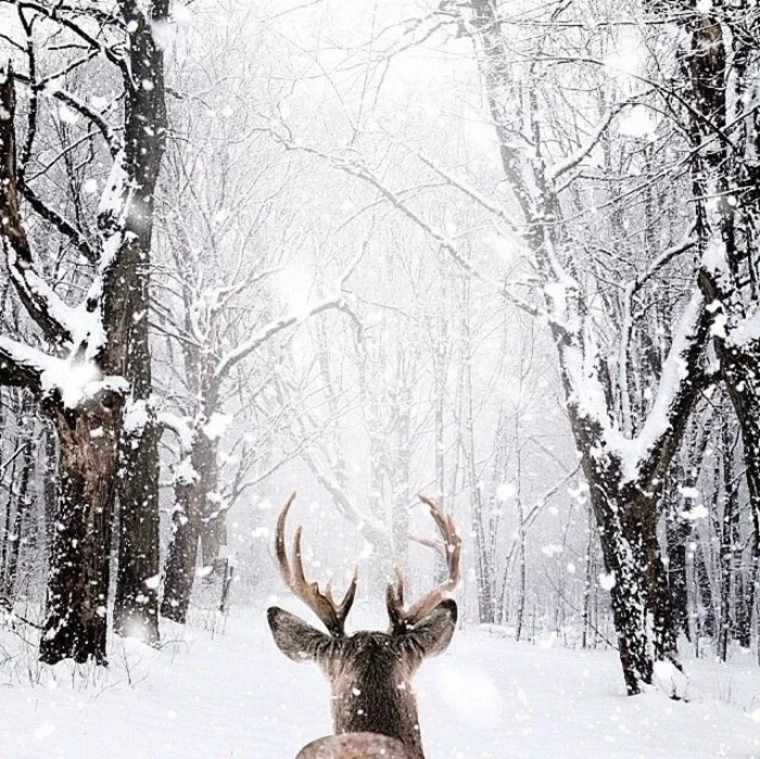 paisajes hermosos reno