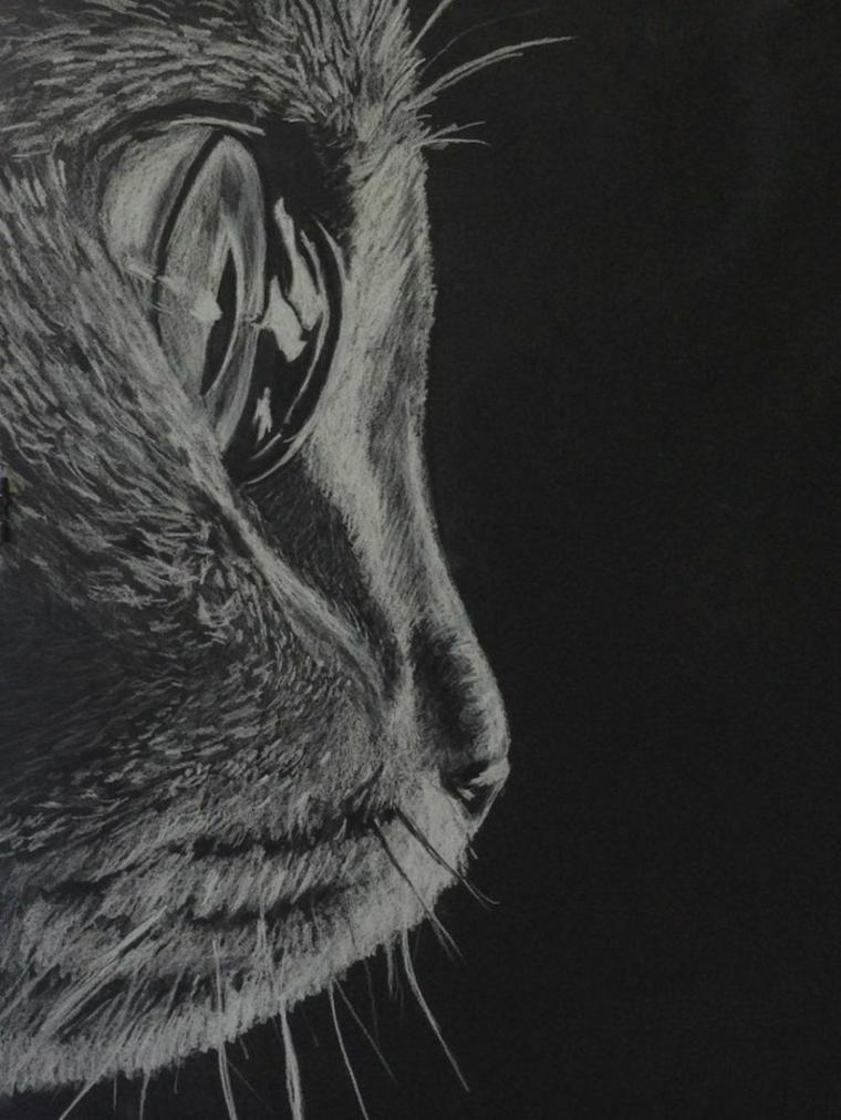 perfil-de-gato
