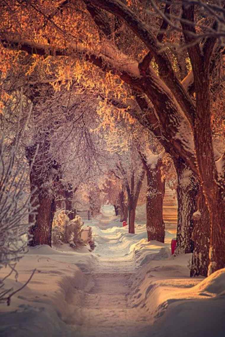 sendero-en-la-nieve