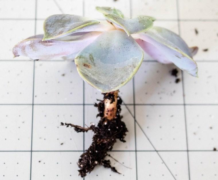 suculentas-plantas-maceta-forma-corazon-ideas-decorar-natural
