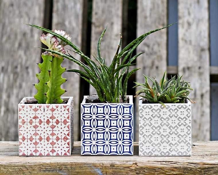 suculentas-plantas-opciones-ideas
