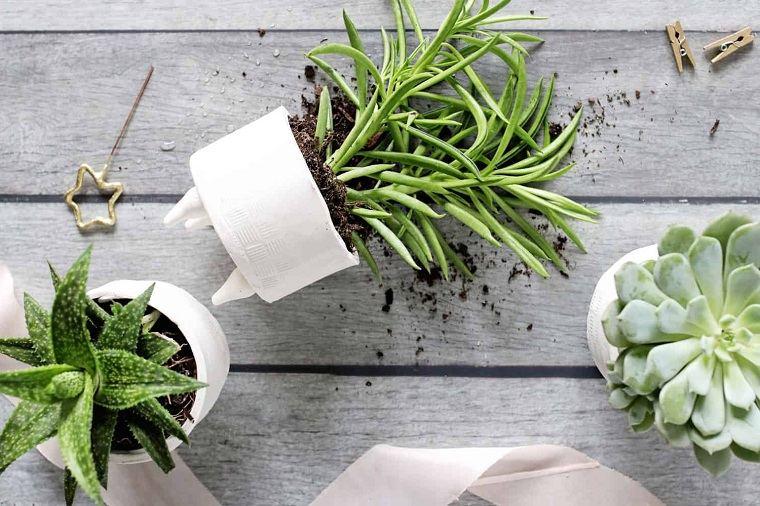 suculentas-plantas-opciones-originales