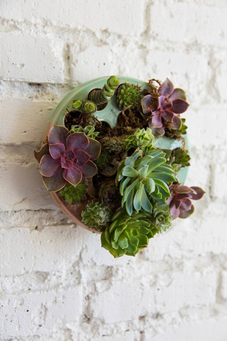 suculentas-plantas-pared-ideas-originales