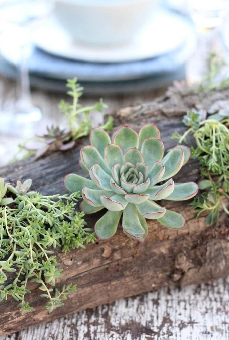 suculentas plantas-proyecto-ideas-decoracion-
