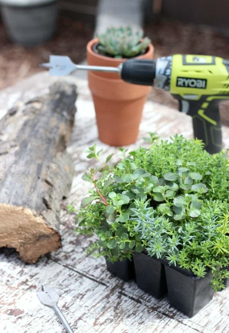 suculentas-plantas-proyecto-ideas-decoracion-aire-libre