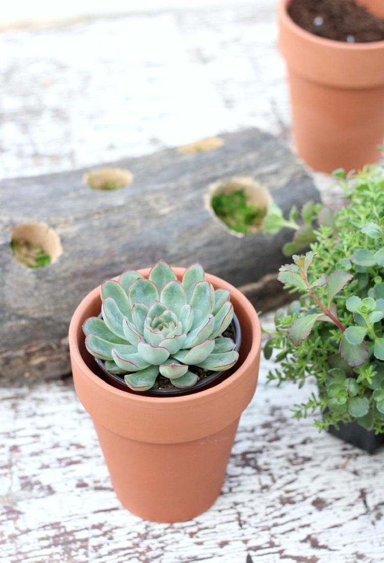 suculentas-plantas-proyecto-ideas-decoracion-bonita