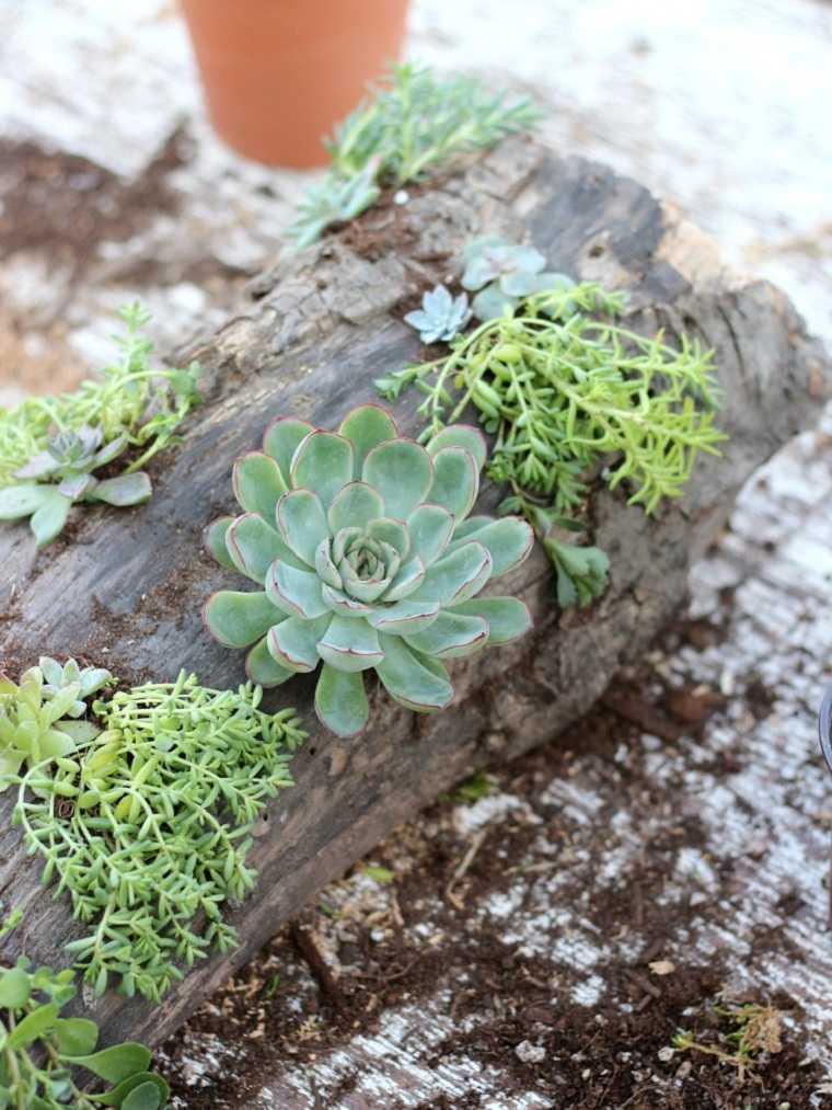 suculentas plantas-proyecto-ideas-decoracion-rustica