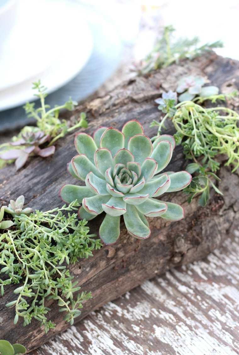 suculentas-plantas-proyecto-ideas-decorar-mesa