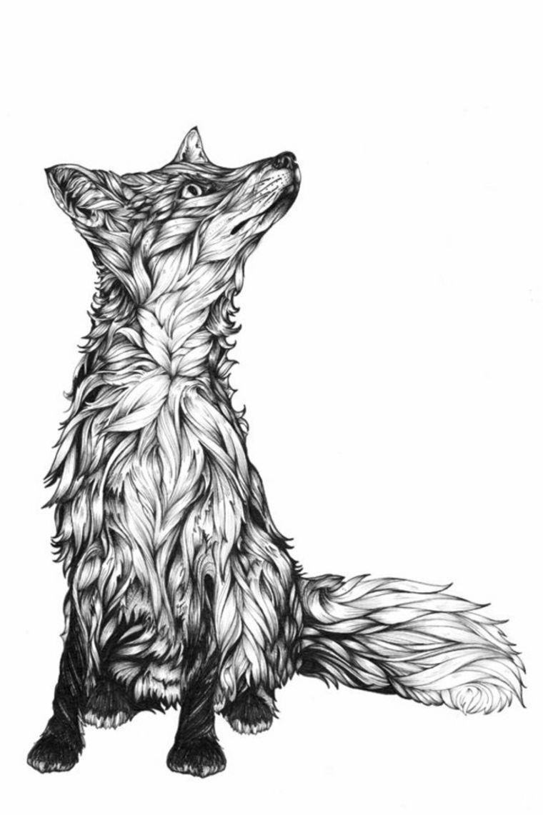 zorro-en-blanco-y-negro